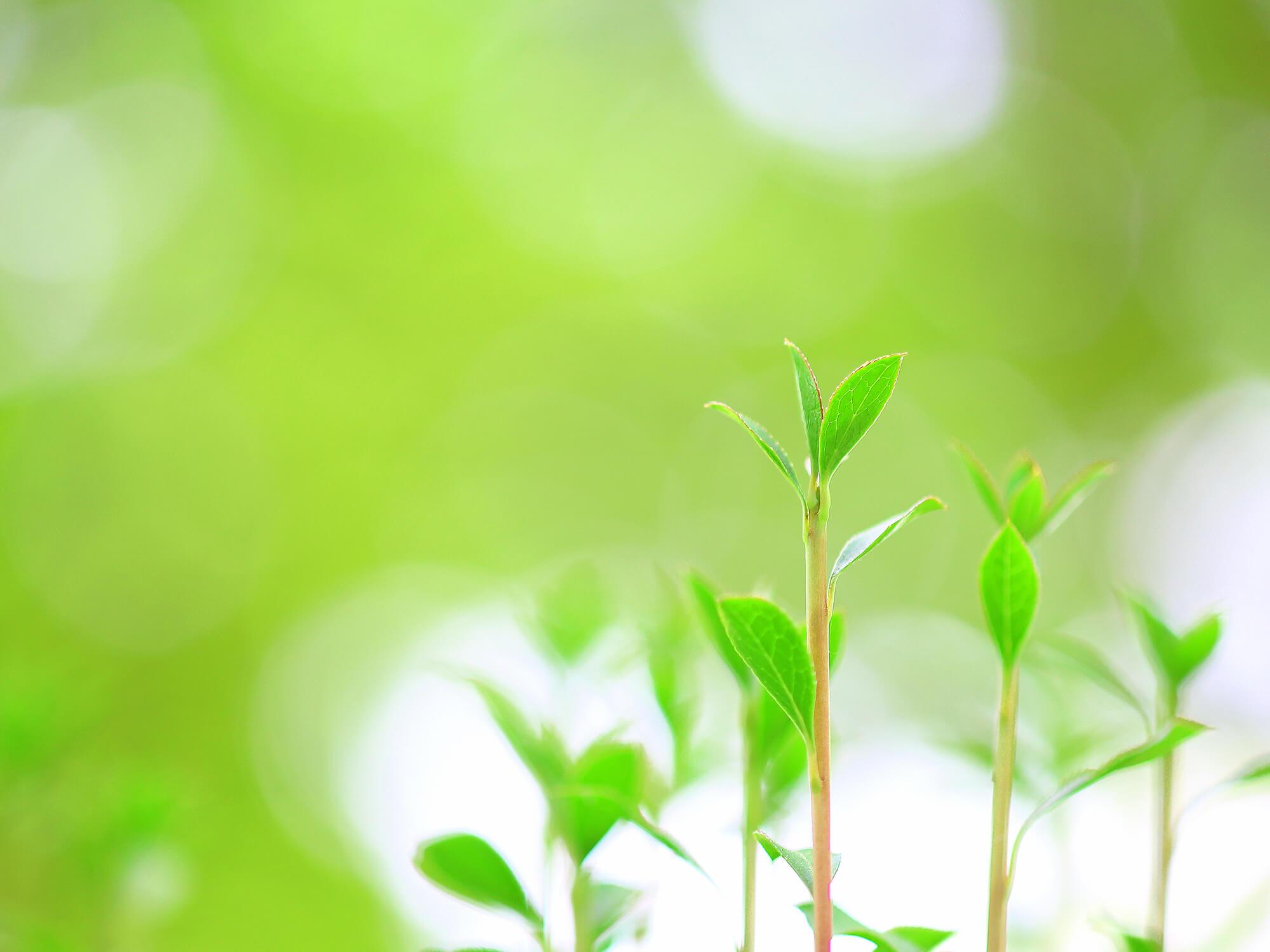 自然のイメージ写真